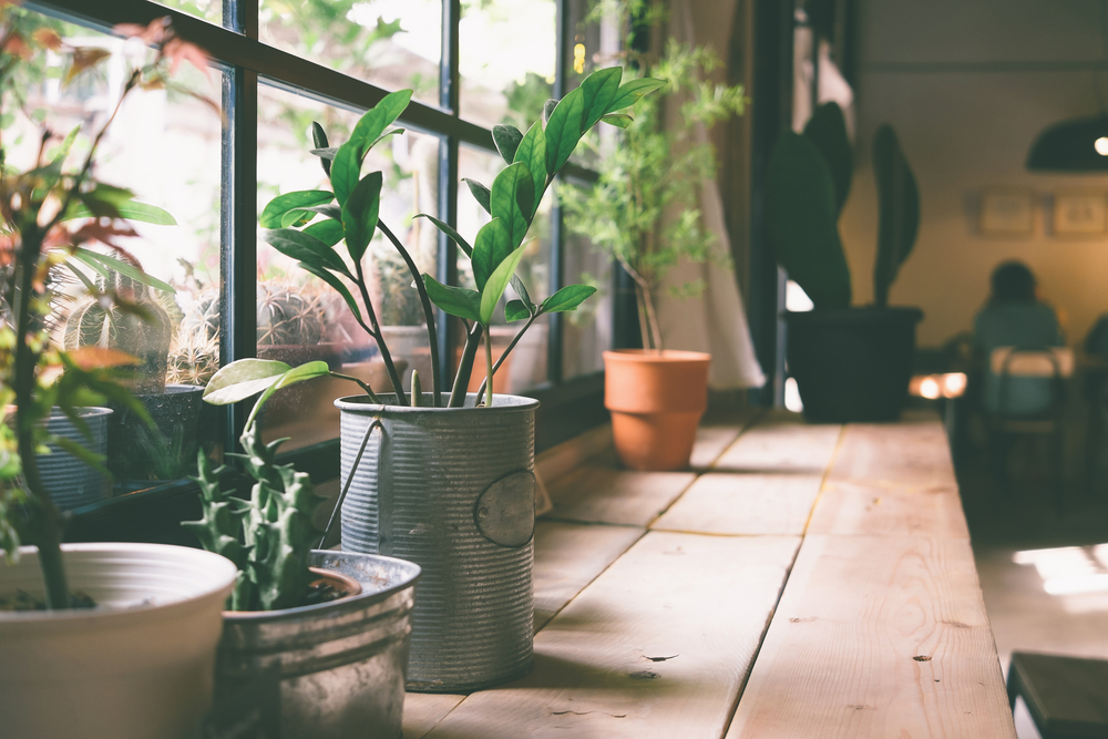 Indoor Plants by Window