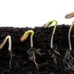 Seed Growing in Dirt