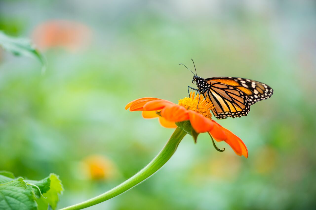 A Haven for Butterflies and Hummingbirds