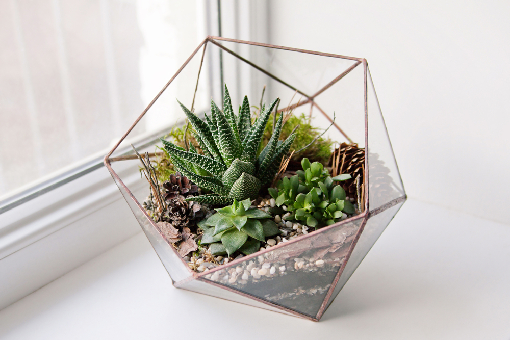 Glass Terrarium with Succulents