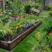 Raised Bed with Herbs and Veggies