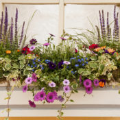 Flower Bed in Windowsill