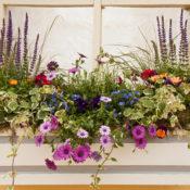 Flower Bed in Windowsill