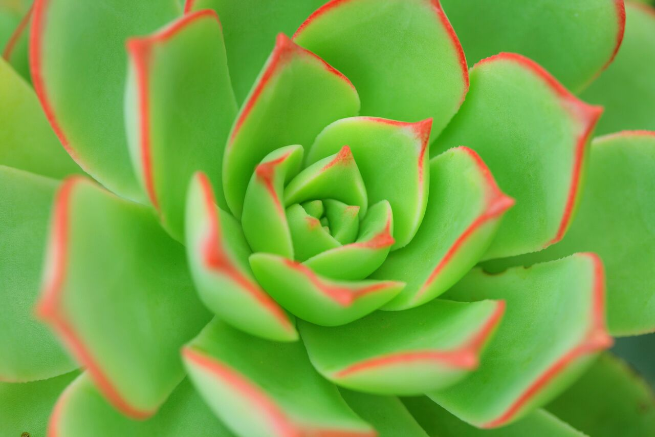 Succulents are easy to care for and fit in any space.