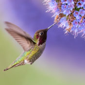 Learn how to attract hummingbirds to your outdoor space.