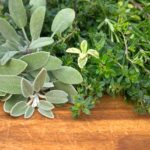 Grow fresh herbs in your garden and enjoy them in food and drinks.