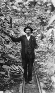 August Cornelius in garden with cucumbers.