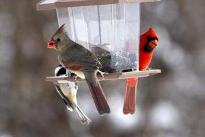 Bird Feeder Winter