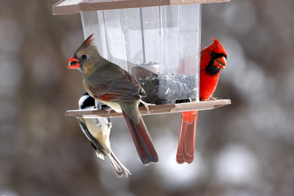 Bird Feeder Winter