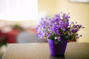 Flowers on Kitchen Counter