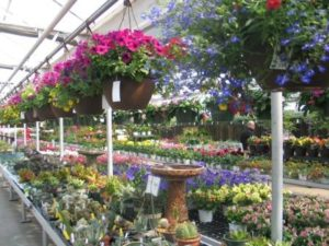Wagner Greenhouses, Inc. Now A Fifth Generation Family Owned Business Since  1901, Operates Greenhouses In Minneapolis And Hugo, And Garden Centers In  ...