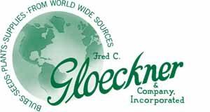 Gloeckner logo new