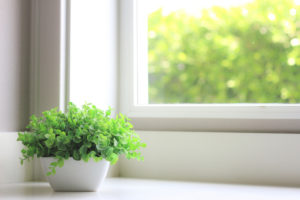 Indoor Green Plant on Windowsill