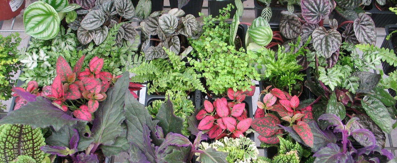 Indoor care green plants wagners greenhouses for Indoor green plants images
