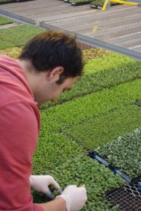 Quality Control for Young Plants