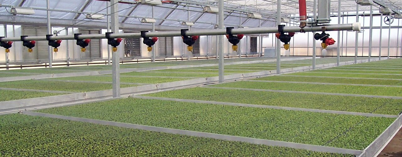 Young Plant Range