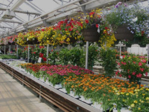 Employment Opportunities Mn Wagners Greenhouses
