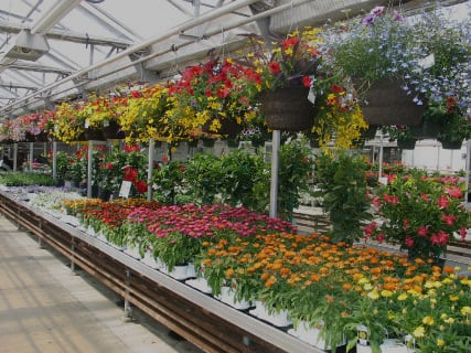 Garden Center Whole Plants Mn Wagners Greenhouses