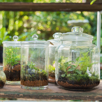 Terrarium Care Sheet Wagners Greenhouses