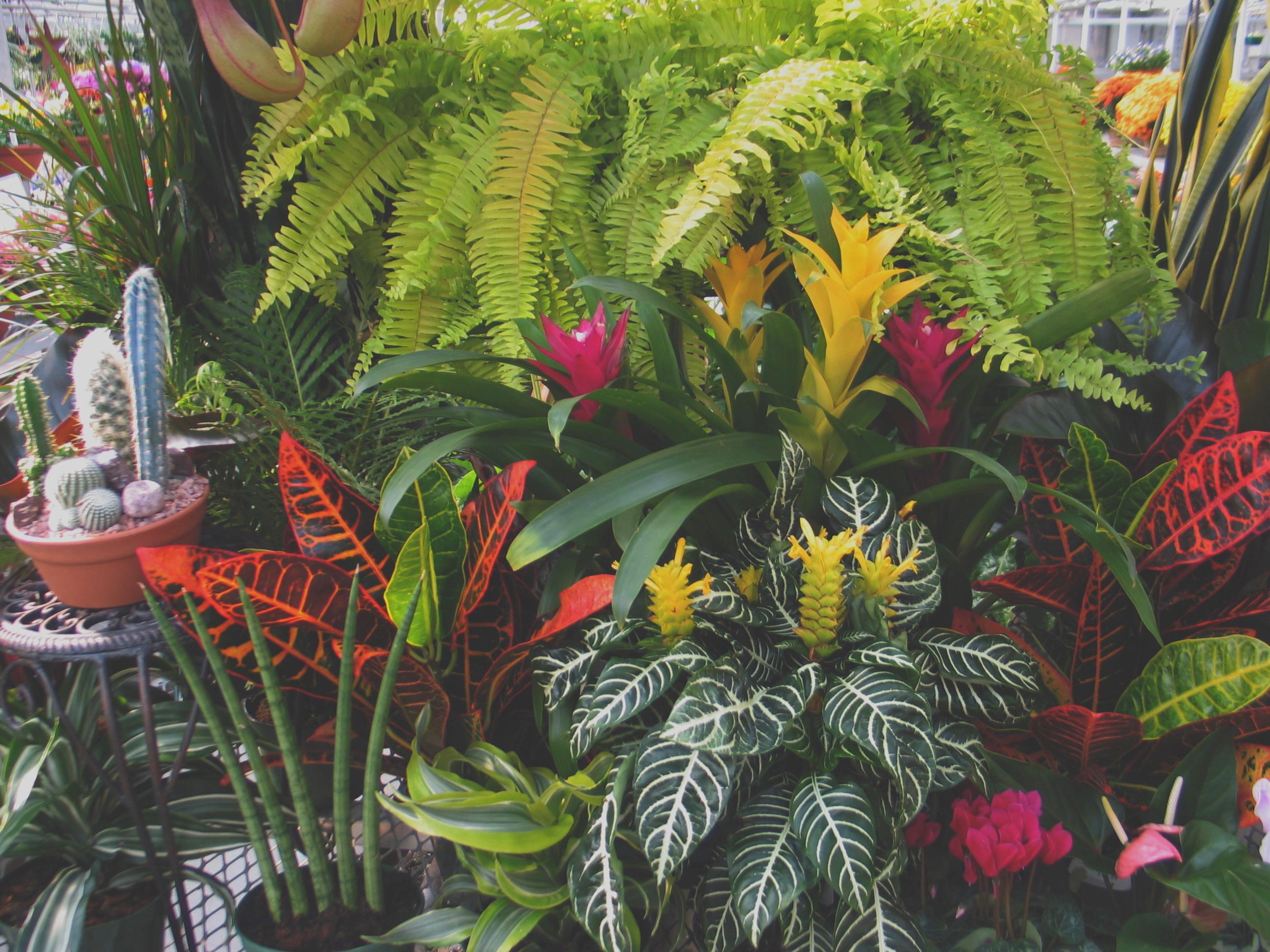 Garden Centre: Garden Center & Wholesale Plants