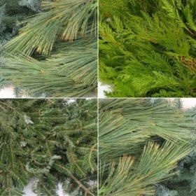 Fresh Spruce Tops & Evergreens For Sale Minneapolis Metro