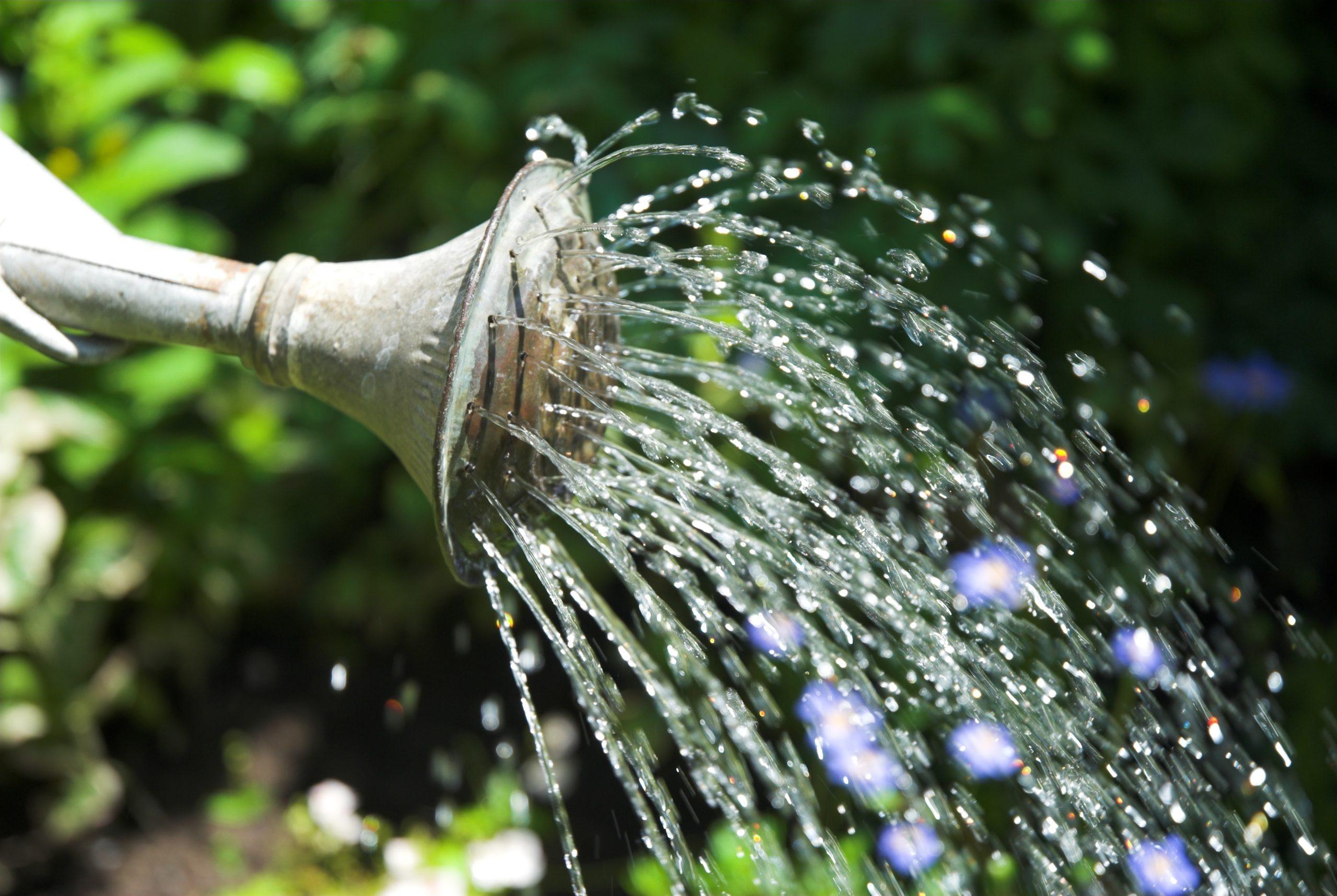 house watering flowers